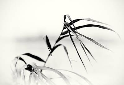 Photograph - Impressions Monochromatic by Tomasz Dziubinski