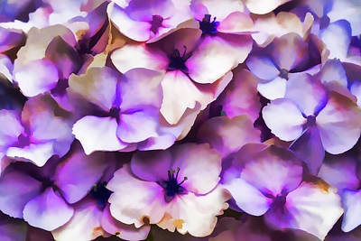 Photograph - Impressions Of A Hydrangea by Steve Purnell