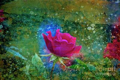 Photograph - Impressions Of A Rose by Mary Machare