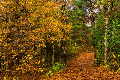 Pathway Digital Art - Impressions Of Forests - A Walk Up The Colorful Autumn Path by Georgia Mizuleva