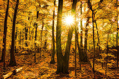 Impressions Of Forests - Sunburst In The Golden Forest  Art Print