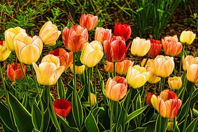Vivid Colour Painting - Impressions Of Gardens - Particolored Vernal Tulips by Georgia Mizuleva