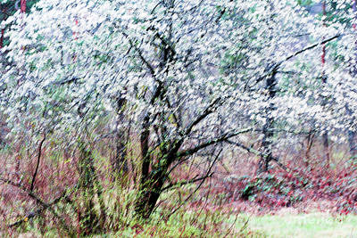 Impressionism Photos - From A Distance by DiFigiano Photography