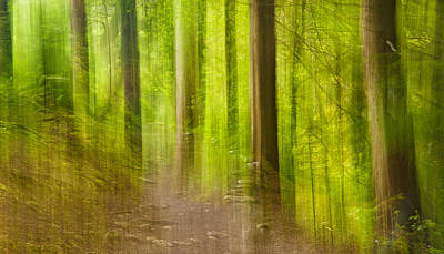 Aira Force Wall Art - Photograph - Impressions Of The Forest by Paul Cullen
