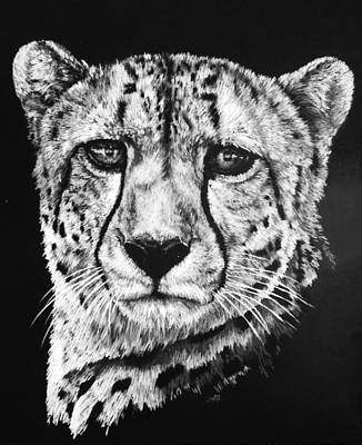 Cheetah Drawing - Impressive by Barbara Keith