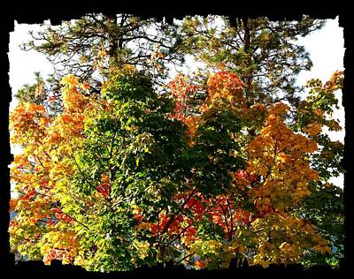 Photograph - Impressive Fall Colors by Will Borden