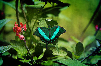 Photograph - In A Butterfly World by Milena Ilieva