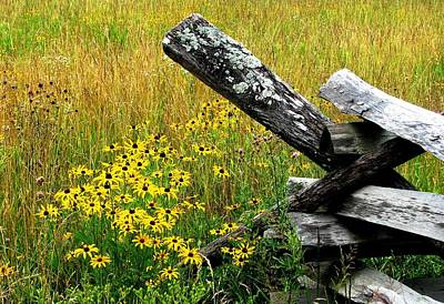 Split Rail Fence Photograph - In A Country Meadow by Angela Davies