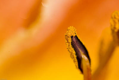 Abstract Photograph - In A Daylily by Ches Black