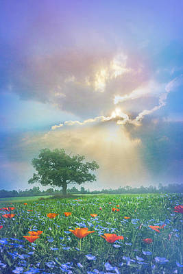 Photograph - In A Dream At Sunset After The Rain by Debra and Dave Vanderlaan