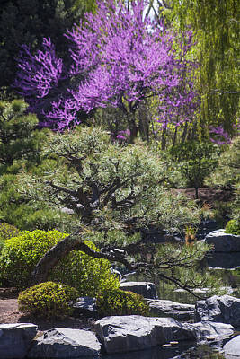 Photograph - In A Japanese Garden by Morris  McClung
