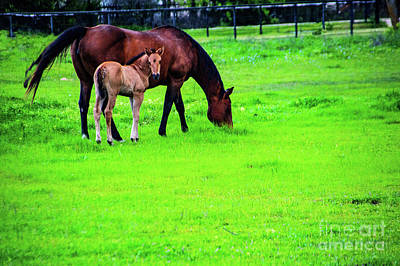 Photograph - In A Pasture by Diana Mary Sharpton