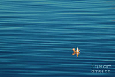 Photograph - In A Sea Of Blue by Sonya Lang