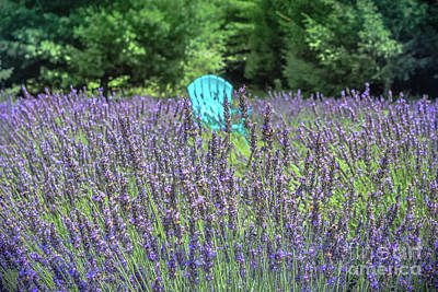 Photograph - In A Sea Of Lavender by Colleen Kammerer