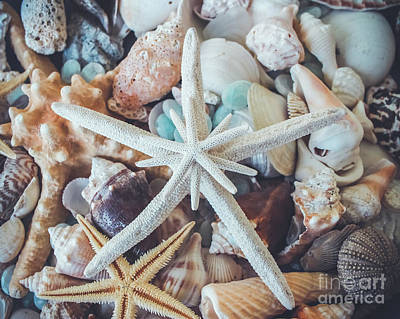 Photograph - In A Sea Of Shells-  by Colleen Kammerer