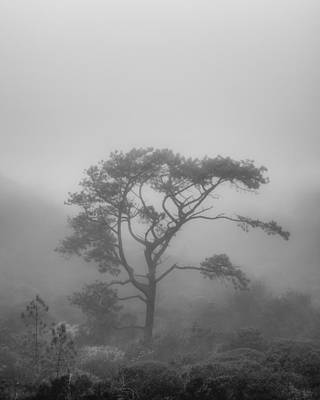 Solitude Photograph - In A Soft Fog by Joseph Smith