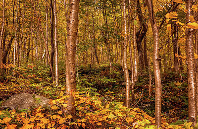Photograph - In A Vermont Wood by Tim Bryan