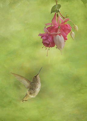 Photograph - In Awe Of The Fuchsia by Angie Vogel