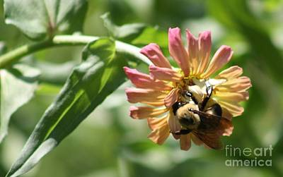 Annette Kinship Wall Art - Photograph - In Bee'tween The Flight by Annette Kinship