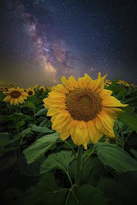 Photograph - In Bloom by Aaron J Groen