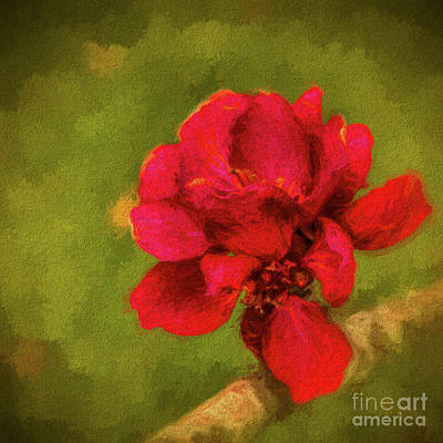 Photograph - In Bloom by Dave Bosse