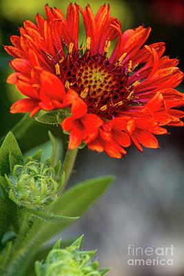 Photograph - In Bloom by Deborah Klubertanz