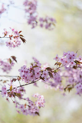 Art Print featuring the photograph In Bloom. Spring Watercolors by Jenny Rainbow