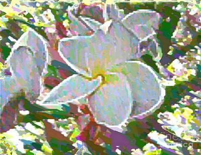 Photograph - In Bloom by Vicki Lynn Sodora