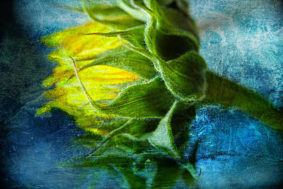 Art Print featuring the photograph In Blue by John Rivera