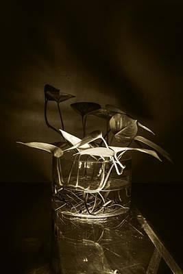 Photograph - In Brown Light by Rajiv Chopra
