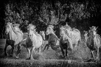 Troupeau Photograph - In Camargue by Alain Gaymard