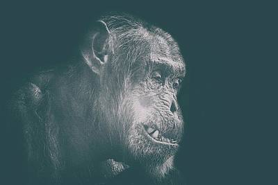 Orangutan Wall Art - Photograph - In Deep Thought by Martin Newman