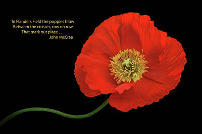 Photograph - In Flanders Field - Red Poppy - Text by Nikolyn McDonald