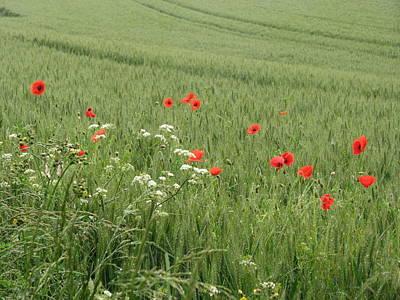in Flanders Fields the  poppies blow Art Print by Mary Ellen Mueller Legault