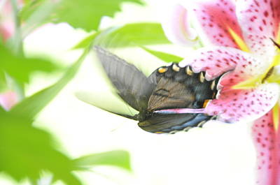 Photograph - In Flight 1 by David Arment