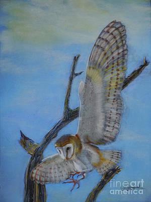 Pastel - In Flight Barn Owl by Lance Sheridan-Peel