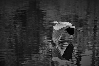 Photograph - In Flight Black And White by Warren Thompson