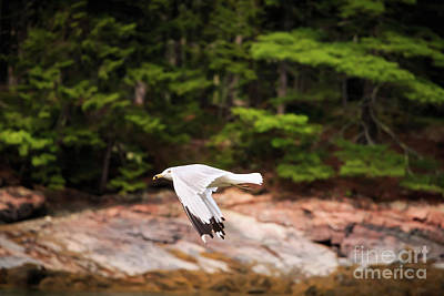 Photograph - In Flight by Elizabeth Dow