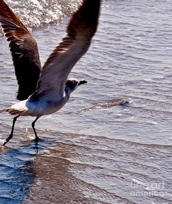 Photograph - In Flight by Frank Williams