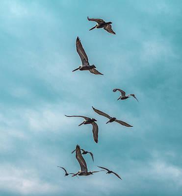 Photograph - In Flight by Gerald Monaco