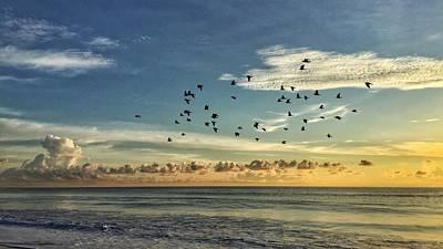 Photograph - In Flight by Juan Montalvo