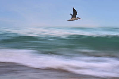Flying Gull Photograph - In Flight by Laura Fasulo