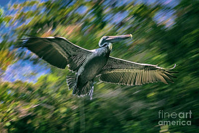 Photograph - In Flight by Mariola Bitner
