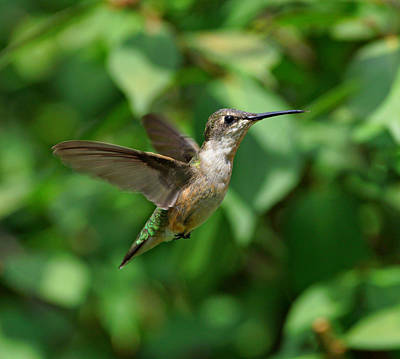 Photograph - In Flight by Sandy Keeton
