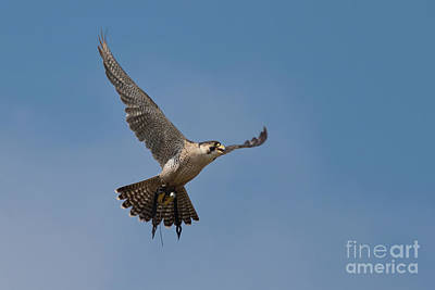 Photograph - In Flight by Terri Waters