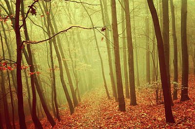 Photograph - In Foggy Autumn Forest by Jenny Rainbow
