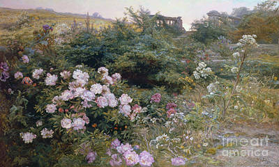 Pink Roses Painting - In Full Bloom  by Henry Arthur Bonnefoy
