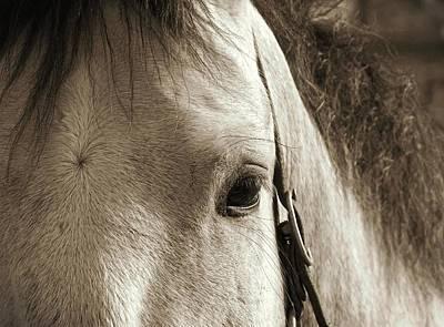 Photograph - In German Pferd by JAMART Photography