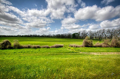 Photograph - In Green Pastures by TK Goforth