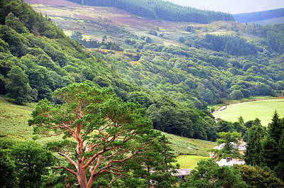 Photograph - In Green Valley Of Wicklow Hills. Ireland by Jenny Rainbow